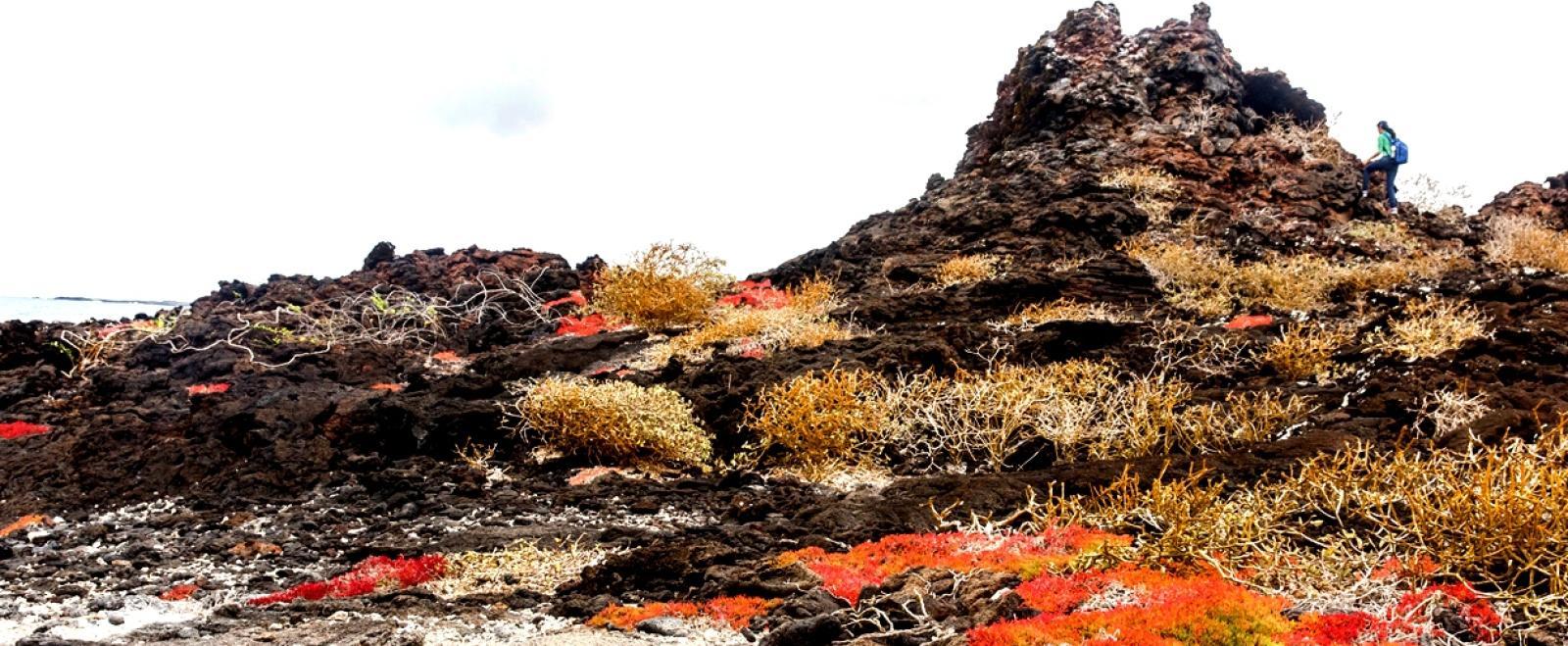 エクアドルのガラパゴス諸島の風景